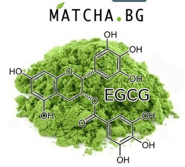 ECGC Matcha.bg