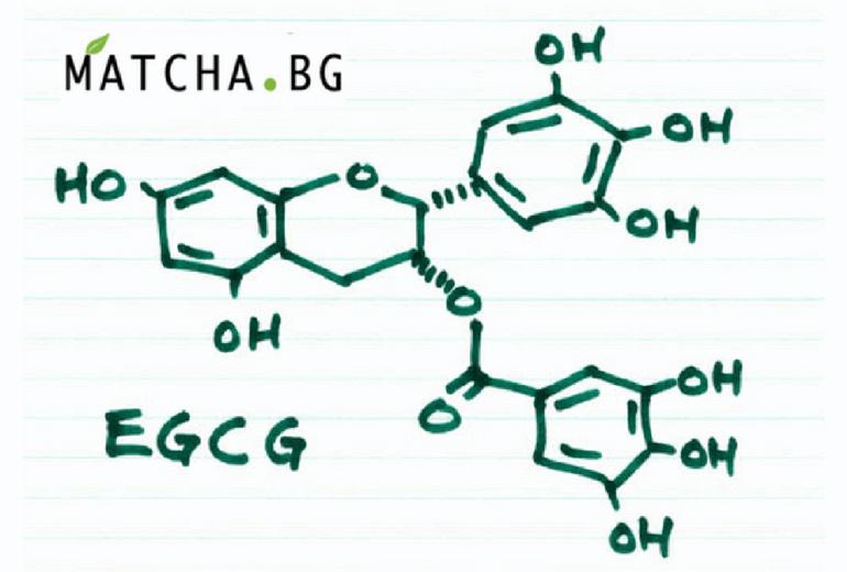 Какво е EGCG (Епигалокатехин галат)?