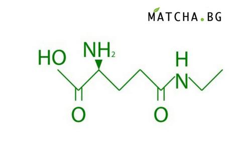 Какво е L-theanine и каква е връзката му с Матча